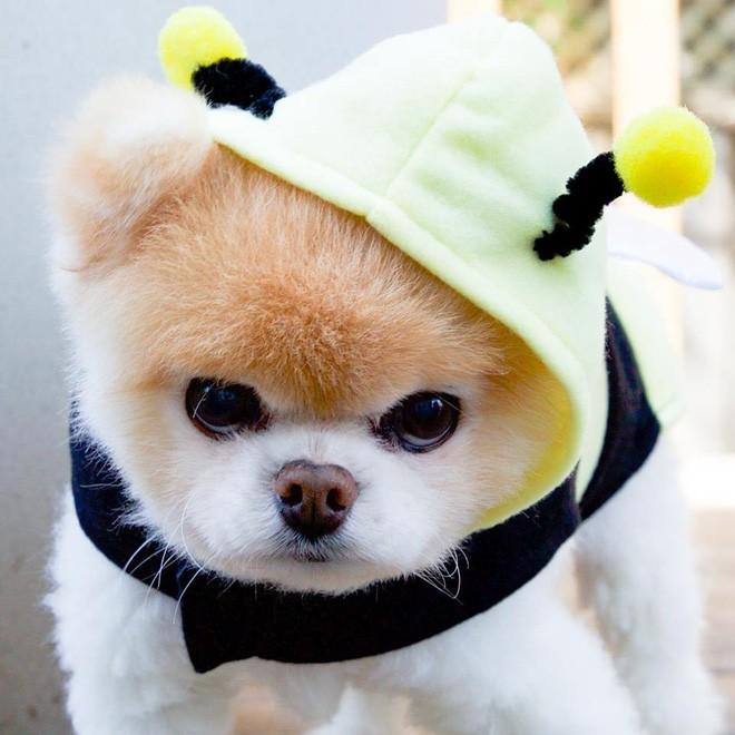 Chú mèo 'Chó' ở Hải Phòng nổi tiếng cũng chưa bằng con chó có 16 triệu theo dõi này - ảnh 2