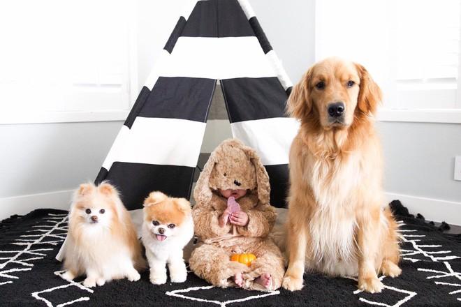 Chú mèo 'Chó' ở Hải Phòng nổi tiếng cũng chưa bằng con chó có 16 triệu theo dõi này - ảnh 6