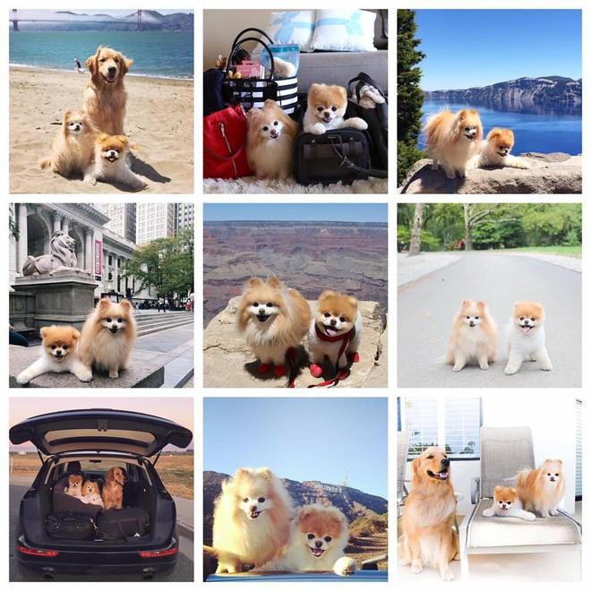 Chú mèo 'Chó' ở Hải Phòng nổi tiếng cũng chưa bằng con chó có 16 triệu theo dõi này - ảnh 7