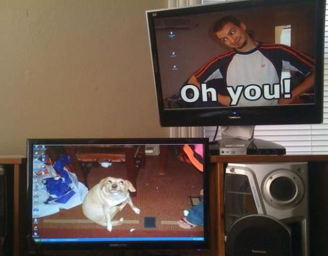 Vui: Tổng hợp loạt hình nền máy tính hài hước nhất, Internet Explorer chuyên bị bắt nạt - ảnh 11