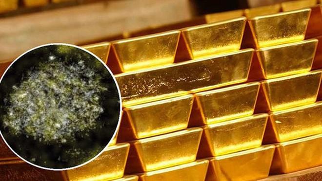 Gà đẻ trứng vàng chỉ có trong cổ tích, còn loại vi khuẩn đẻ ra vàng này là có thật - ảnh 3
