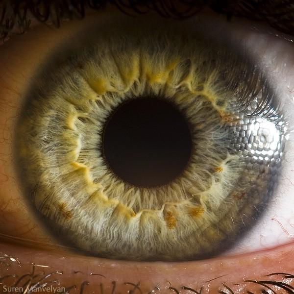 """Tiết lộ 5 sự thật về tính cách và sức khỏe qua màu mắt mà khoa học nói """"chắc như đinh đóng cột"""" - ảnh 5"""
