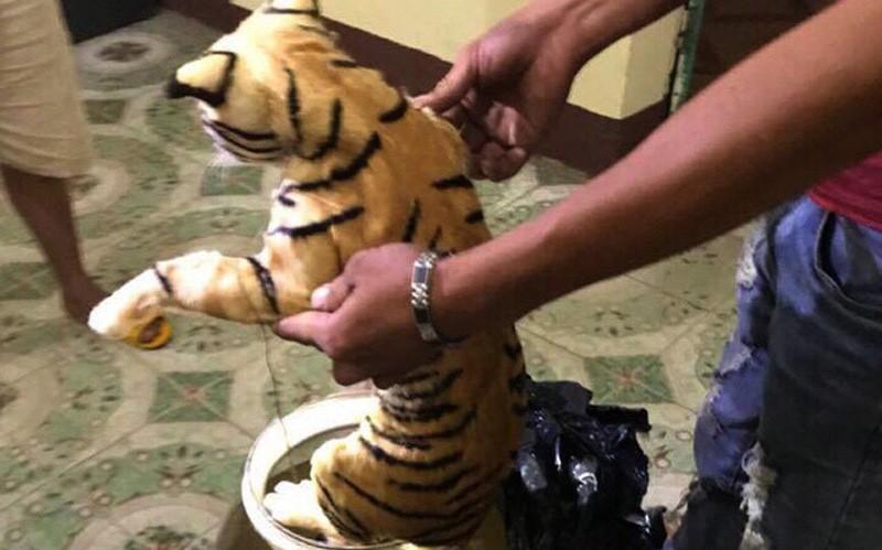 Phát hiện hai cá thể hổ nằm trong bình thủy tinh di chuyển ra Hà Nội