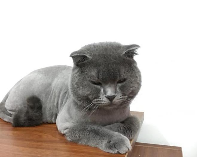 Minh chứng cho thấy làm lông cho lũ mèo không hề dễ dàng trơn tru như ta vẫn tưởng - Ảnh 3.