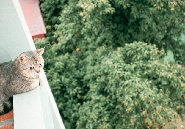 Chú mèo tên Bư nổi tiếng trên MXH bất ngờ qua đời khiến cư dân mạng tiếc nuối - ảnh 13