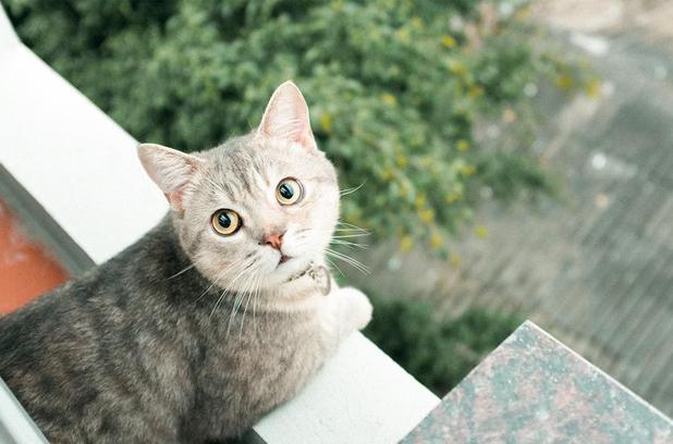 Chú mèo tên Bư nổi tiếng trên MXH bất ngờ qua đời khiến cư dân mạng tiếc nuối - ảnh 12