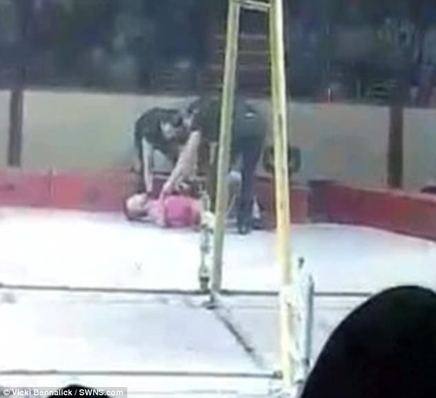 Clip: Đang biểu diễn, diễn viên xiếc gặp nạn rơi từ độ cao hơn 9m xuống sàn - ảnh 2