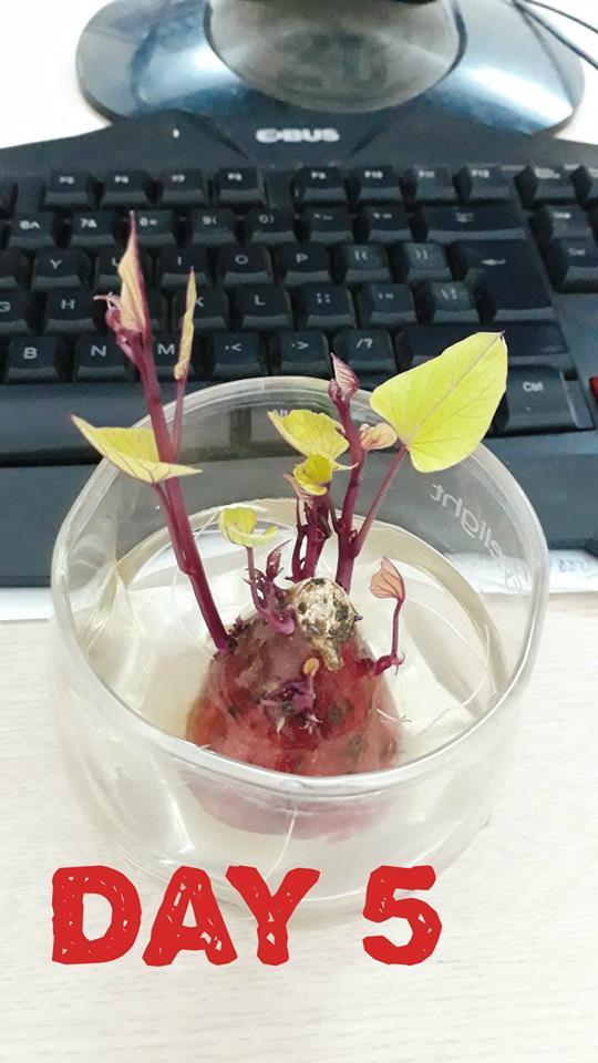 Hành trình trở thành hoa khôi văn phòng bất đắc dĩ của một củ khoai lang - Ảnh 3.