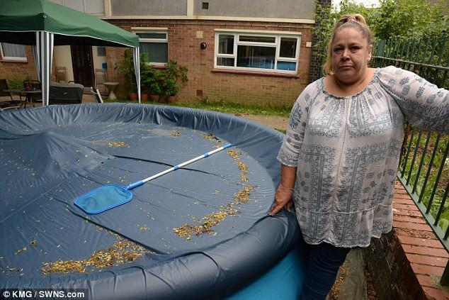 Cộng đồng dân cư của năm: Kêu gọi tháo nước bể bơi để trộm khỏi chết đuối - ảnh 1
