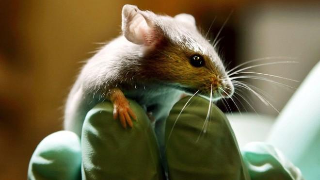 Trí tuệ nhân tạo đã tiến bộ đến mức thay thế được thí nghiệm dùng động vật sống - ảnh 1