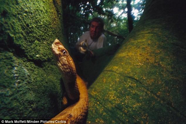 Hòn đảo nguy hiểm bậc nhất thế giới, cấm con người đặt chân lên tại Brazil: 1 mét vuông 5 con rắn - ảnh 4