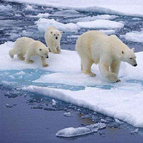 Những bức hình sẽ giúp bạn hiểu thế giới tự nhiên ngập tràn các loài vật khổng lồ mà bản thân không nhận ra - ảnh 1