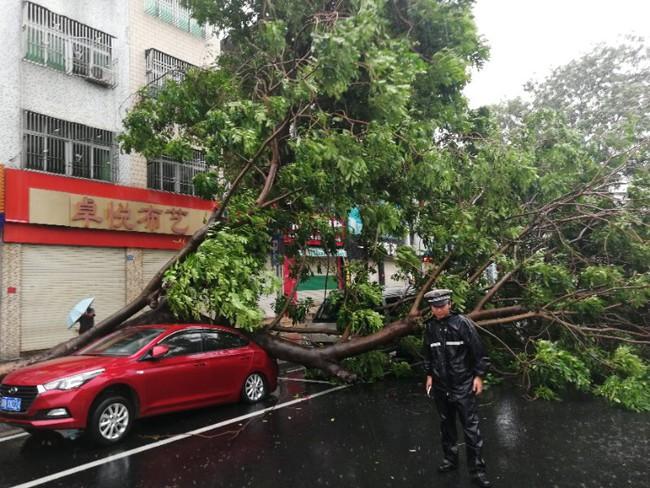 Siêu bão Mangkhut khiến giao thông công cộng tại Quảng Đông (Trung Quốc) tê liệt - ảnh 1