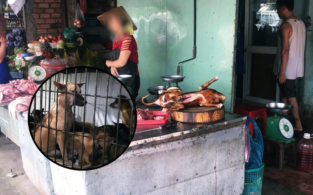 """Người bán thịt chó ở Sài Gòn: """"Có đến 80-90% là chó bị trộm hoặc bị đánh thuốc"""""""