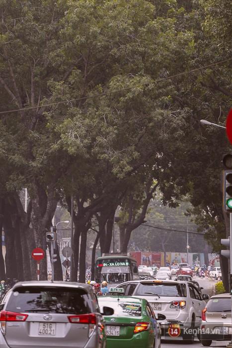 Chùm ảnh: Người Sài Gòn đặt hoa hồng trên gốc những hàng cây xanh bị đốn hạ ở đuờng Tôn Đức Thắng - ảnh 19