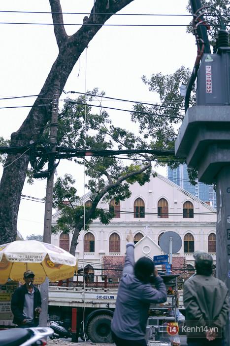 Chùm ảnh: Người Sài Gòn đặt hoa hồng trên gốc những hàng cây xanh bị đốn hạ ở đuờng Tôn Đức Thắng - ảnh 7