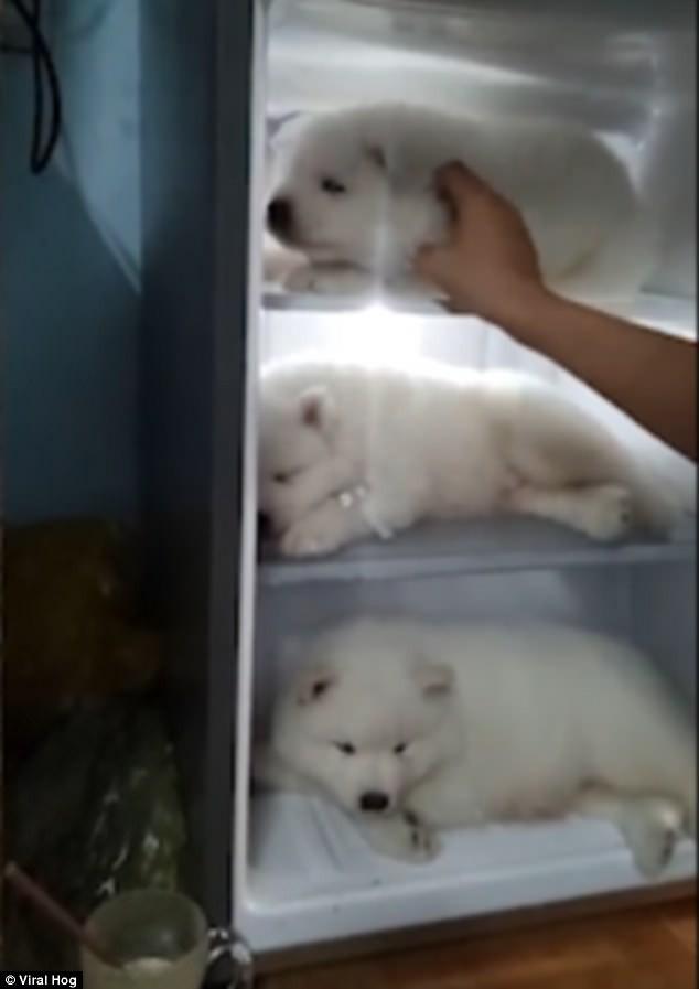 Clip thanh niên Việt Nam cho 3 chú chó con vào tủ lạnh tránh nóng lên báo nước ngoài - Ảnh 3.