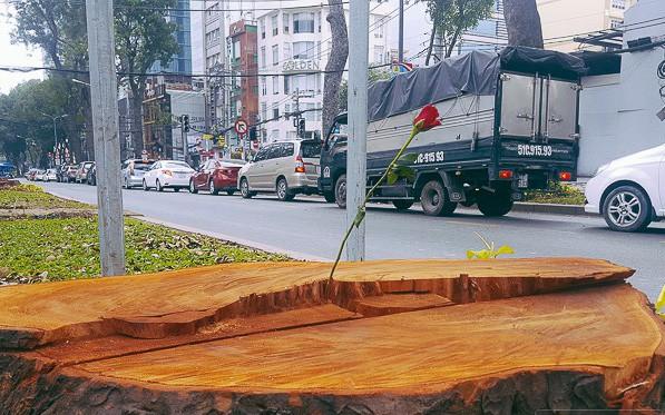 Chùm ảnh: Người Sài Gòn đặt hoa hồng trên gốc những hàng cây xanh bị đốn hạ ở đuờng Tôn Đức Thắng