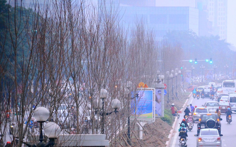 Chùm ảnh: Tận thấy hàng trăm cây phong lá đỏ mới được trồng trên phố Trần Duy Hưng ở Hà Nội