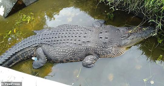 Cá sấu nhảy lên tường cao 2,5m, giết chết nhà khoa học nữ - ảnh 2