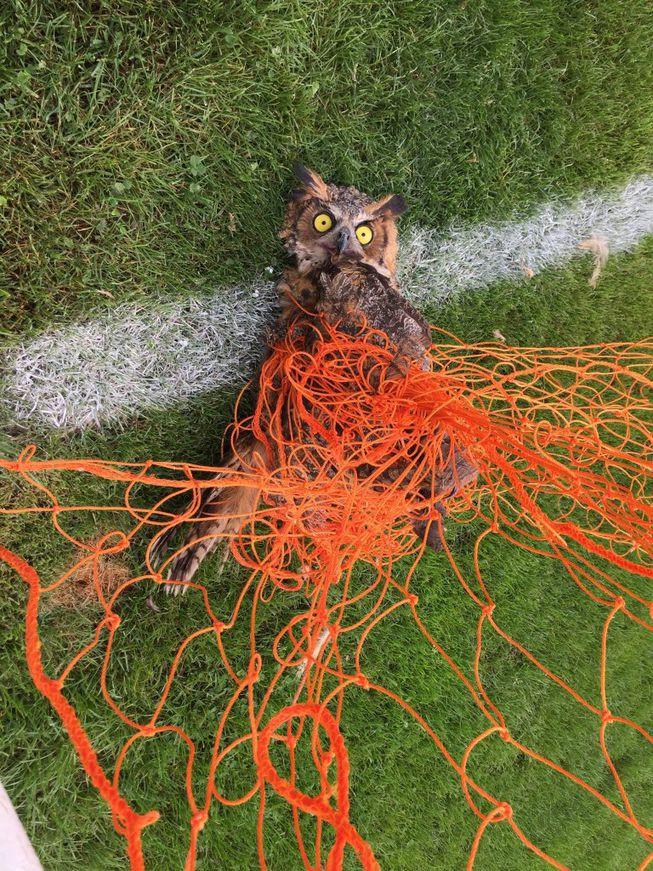 Chuyện động vật kẹt trong lưới sân bóng: tưởng đơn giản mà hậu quả nghiêm trọng không ngờ - ảnh 2