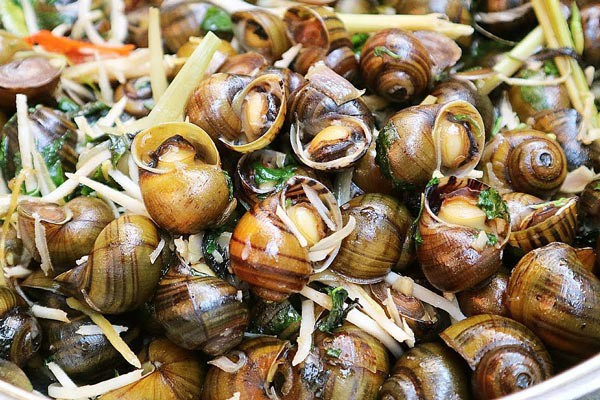 Ăn loại ốc này vào mùa thu đông không chỉ ngon mà còn chữa được vô số bệnh hay ho thế này! - ảnh 1