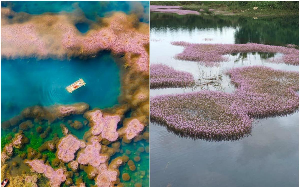 """Dân mạng phát sốt trước hồ Tảo Hồng có thật 100% giữa Việt Nam, lên hình muốn """"ảo tung chảo"""" thì phải nhớ chỉnh màu?"""