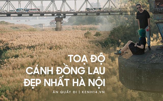 Hà Nội vào mùa cỏ lau đẹp ngút mắt: lên ảnh đẹp thế này thì cần gì sang tận Hàn Quốc chụp cỏ hồng?