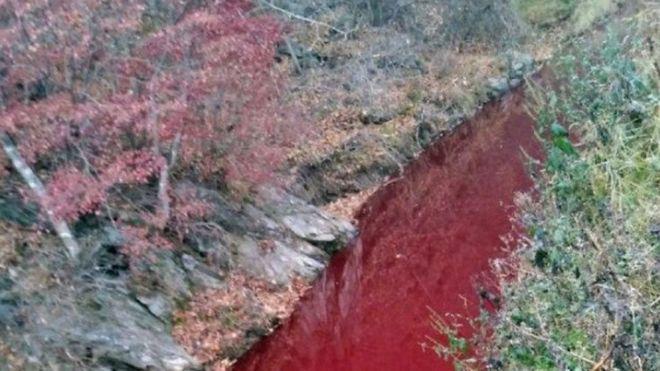 Nước sông tại Hàn Quốc bất ngờ hóa đỏ màu máu - ảnh 1