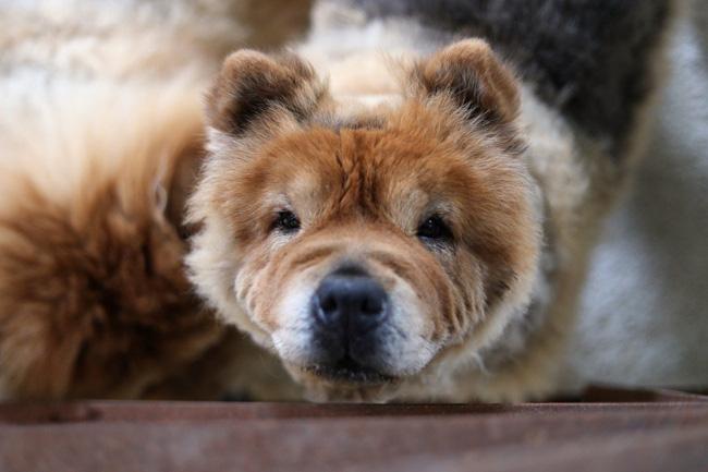 Người Hàn Quốc đổ xô mua thuốc thú y cho chó vì tin đồn chữa được ung thư - ảnh 2