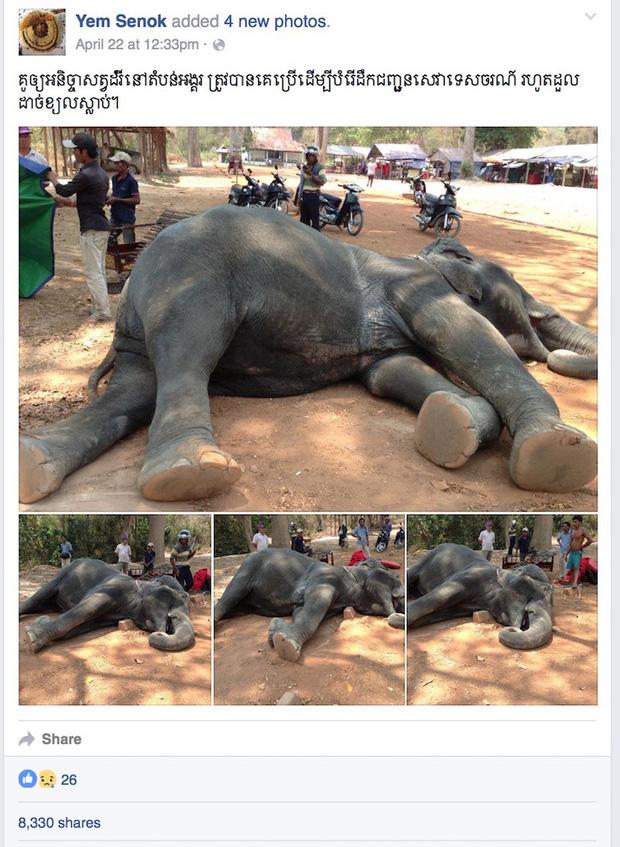 Sau làn sóng phẫn nộ từ dư luận, chính phủ Campuchia chính thức cấm cưỡi voi ở Angkor Wat - Ảnh 2.