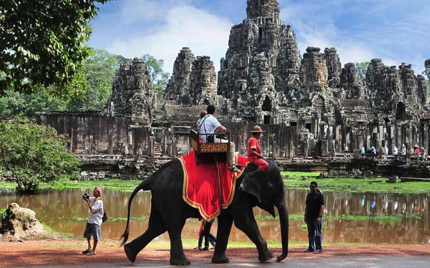 Sau làn sóng phẫn nộ từ dư luận, chính phủ Campuchia chính thức cấm cưỡi voi ở Angkor Wat - Ảnh 1.