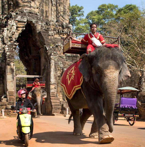 Sau làn sóng phẫn nộ từ dư luận, chính phủ Campuchia chính thức cấm cưỡi voi ở Angkor Wat - Ảnh 5.