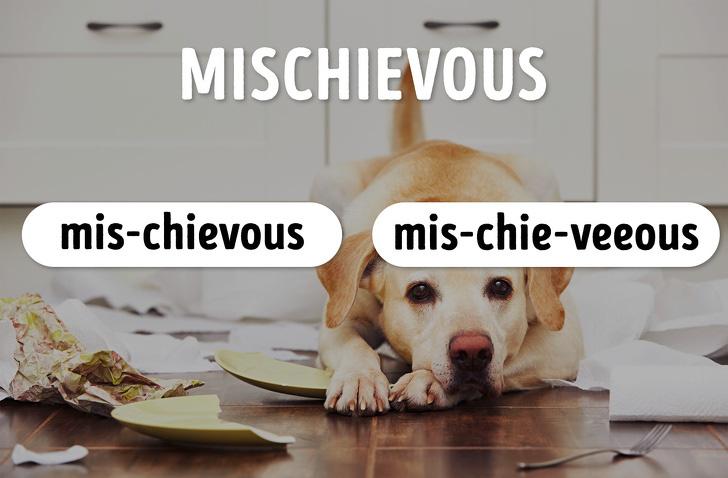 """15 từ tiếng Anh nhiều người tưởng mình phát âm đúng đến khi kiểm tra thì ngỡ ngàng vì như """"1 cú lừa""""! - ảnh 13"""