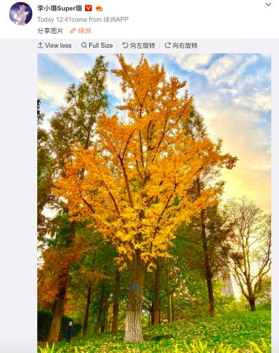 1 tháng sau scandal lộ 3 clip nóng, bài đăng đầu tiên của Lý Tiểu Lộ trên Weibo khiến netizen xôn xao đồn đoán - ảnh 2
