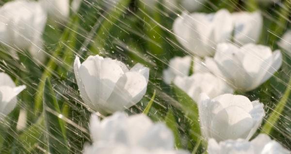 Y học cổ truyền Ấn Độ hướng dẫn thay đổi lối sống khi mùa đông sang xuân, làm theo ngay để luôn sống khỏe - ảnh 3