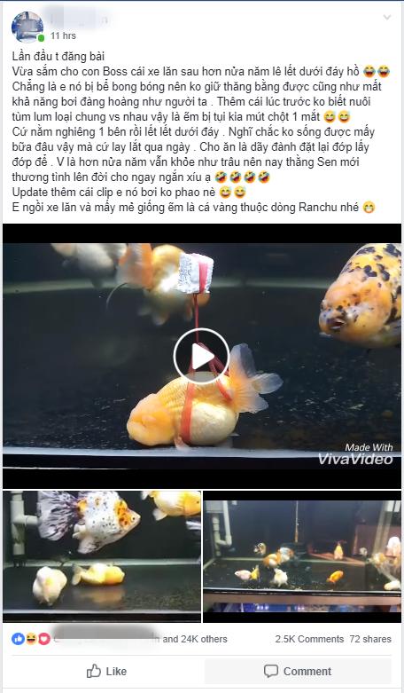 Clip: Chú cá vàng vừa chột vừa què tung tăng bơi lội nhờ chiếc phao dã chiến sau nhiều tháng lê lết dưới đáy bể vì bị xịt bong bóng - Ảnh 1.