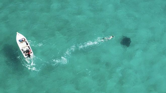 Thà một lần chơi lớn: Khoa học giờ dùng đến cả vệ tinh để giúp cá mập không bị tuyệt chủng - Ảnh 2.