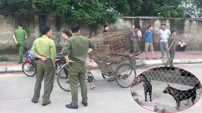 Một nữ lao công ở Hà Tĩnh bị chó tấn công tổn thương nặng phần đầu - Ảnh 1.