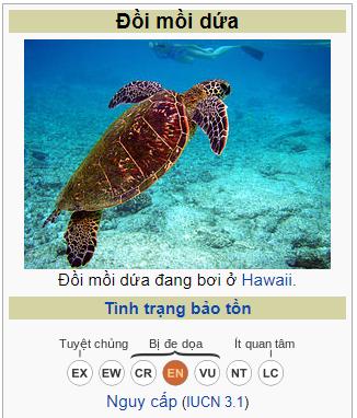 Phát hiện xác cá thể rùa biển bị chặt đứt 2 vây trước tại Vườn quốc gia Núi Chúa - ảnh 3