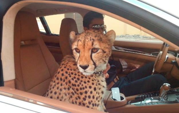 Những sự thật nghiệt ngã ít người biết về Dubai - thành phố dát vàng giàu sang bậc nhất thế giới - ảnh 8