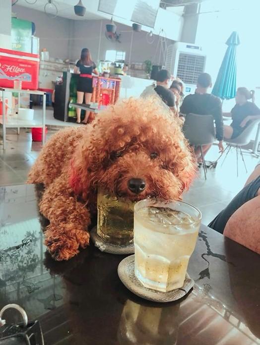 Tranh cãi hình ảnh chú chó cưng trèo lên bàn để uống chung cốc trà đá với chủ trong quán nước - Ảnh 1.