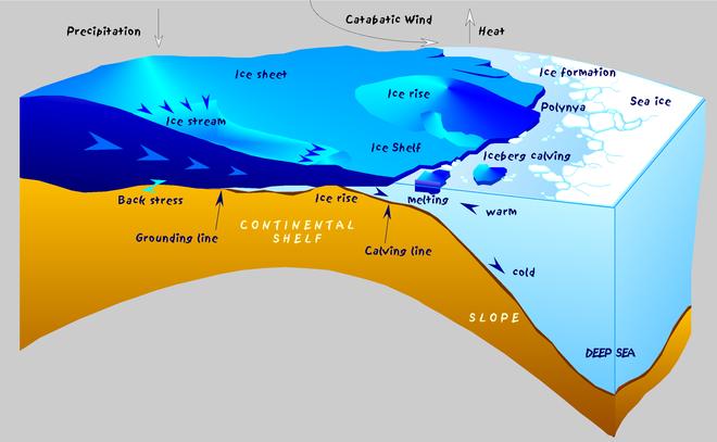 Những con hải cẩu gắn cảm biến giúp khoa học giải mã bí ẩn ở Nam Cực - ảnh 2