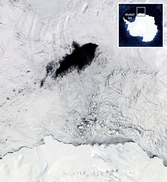 Những con hải cẩu gắn cảm biến giúp khoa học giải mã bí ẩn ở Nam Cực - ảnh 3