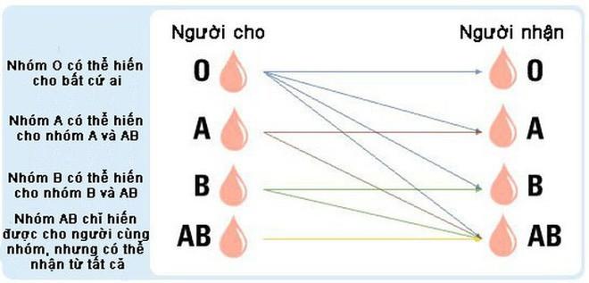 Vi khuẩn trong ruột người có thể biến máu nhóm A thành nhóm O: Tại sao đây là một đột phá quan trọng? - ảnh 3