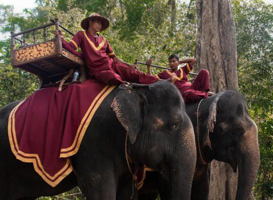Ám ảnh nạn bóc lột động vật dã man, chính phủ Campuchia cấm hẳn dịch vụ cưỡi voi ở Angkor Wat từ năm 2020 - ảnh 8