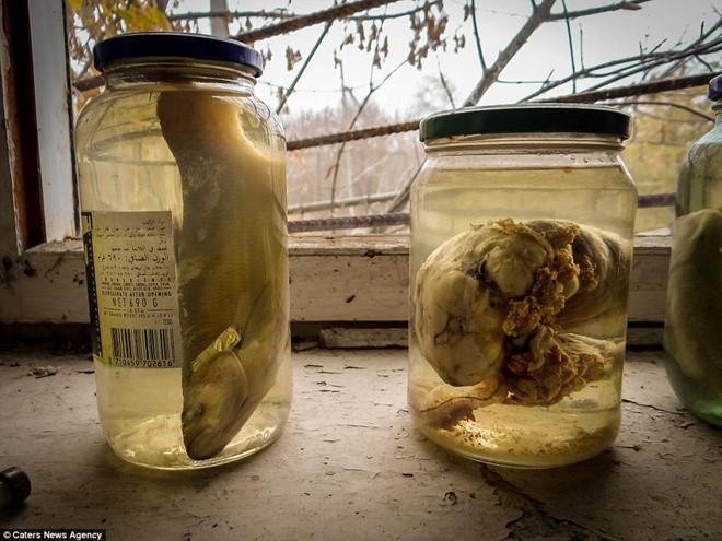 Từ vùng đất ma không ai dám bén mảng, nhà máy điện hạt nhân Chernobyl bỗng hóa xứ sở thần tiên đẹp lịm tim qua lăng kính của nhiếp ảnh gia - ảnh 13