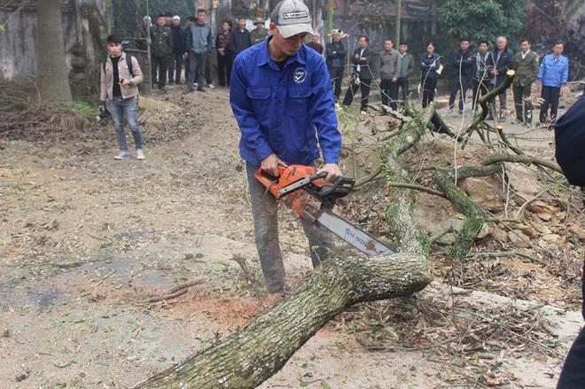 Chính thức chốt ngày bán đấu giá cây sưa từng được trả giá trăm tỷ ở Hà Nội - ảnh 2