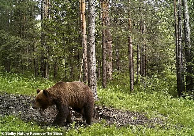 Người đàn ông trông như xác ướp sau khi được cứu từ hang gấu, khiến mọi người sợ hãi khi nói mình bị dự trữ để làm thức ăn - ảnh 3