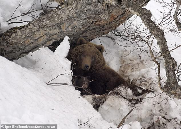 Người đàn ông trông như xác ướp sau khi được cứu từ hang gấu, khiến mọi người sợ hãi khi nói mình bị dự trữ để làm thức ăn - ảnh 1